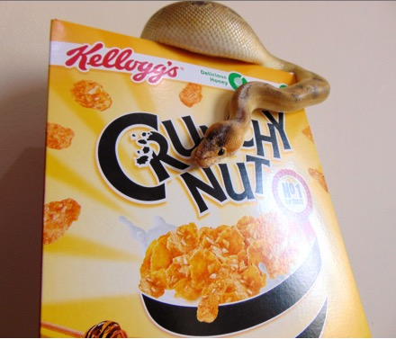 Hunt for discounts like a cobra with a box of crunchy nut